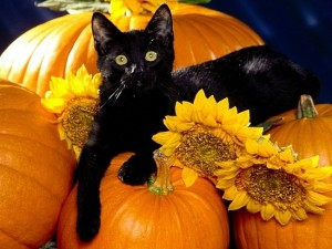 cat n pumpkins
