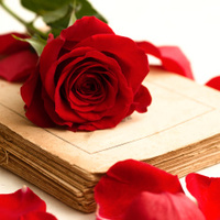book n rose in red