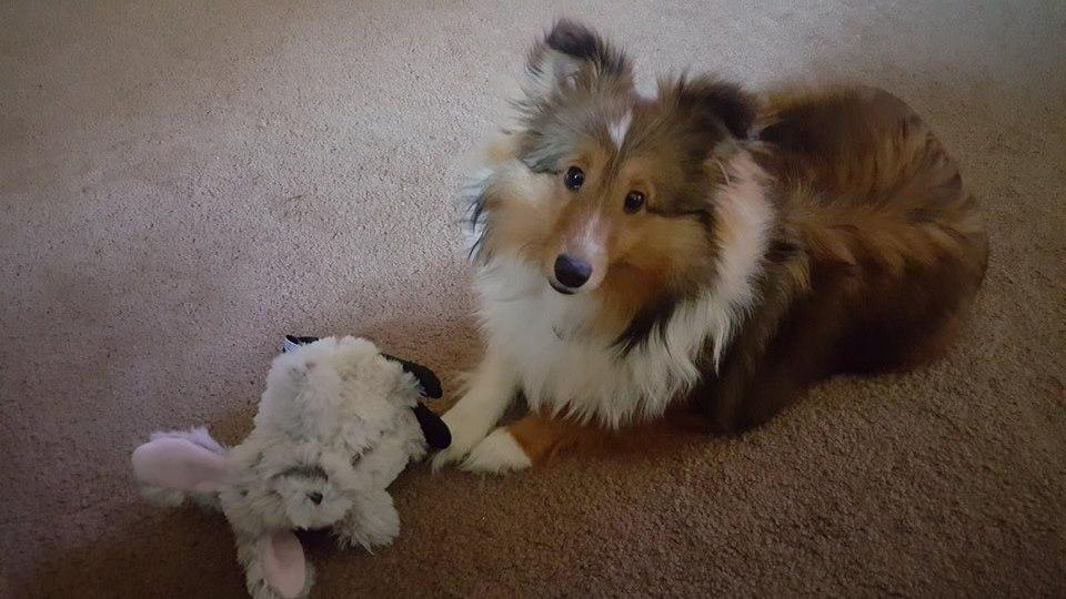 Harley & Her Fluffy Bunny